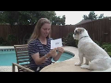 Sonny the Wonder Dog reads