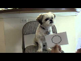 Sonny the Wonder Dog learns Geometry